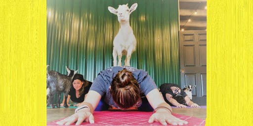 Indoor Goat Yoga by Shenanigoats - Nashville, Sun. @12PM