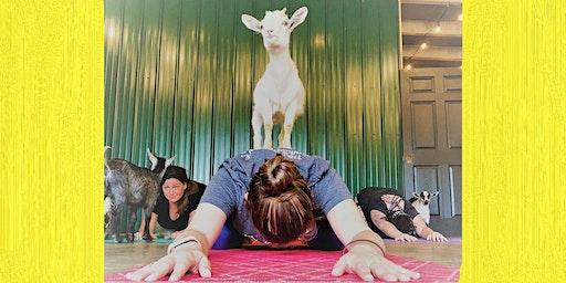 Indoor Goat Yoga by Shenanigoats - Nashville, Sun. @12PM