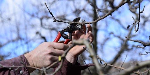 Fruit Tree Pruning 1/25