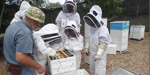 Collingwood Children's Farm Apiary (Sunday 8th December 2019): Hive Inspections