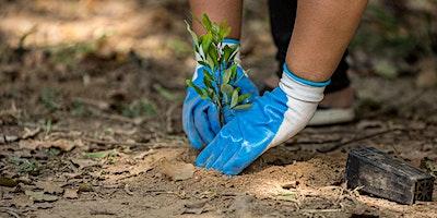 NaturallyGC Tallebudgera Creek Tree Planting