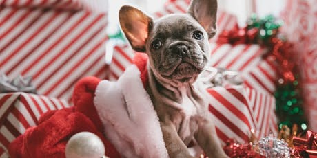 Hawaiian Forrestfield's Christmas Pet Photography  tickets