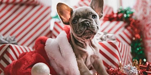 Hawaiian Forrestfield's Christmas Pet Photography