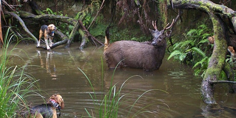 Hound Hunting Test - Mornington tickets