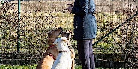 Darwin Animal Regulators Consultation Workshop tickets