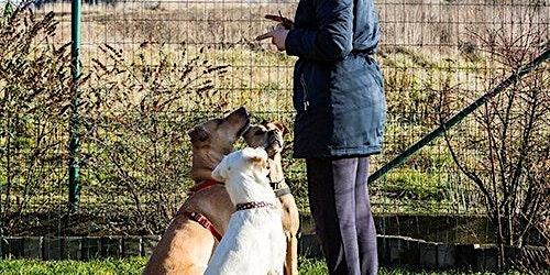 Darwin Animal Regulators Consultation Workshop