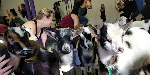 Naaamaste: Goat Yoga Experience