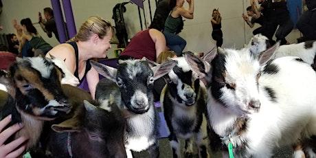 Naaamaste: Goat Yoga Experience  tickets