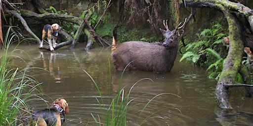 Hound Hunting Test - Bairnsdale