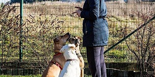 Brisbane Animal Regulators Consultation Workshop