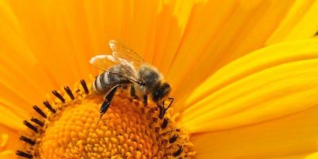 Bee Book (School Holiday Activity)  @Kingston Library tickets