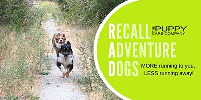 Come When Called: Recall Adventure Dogs