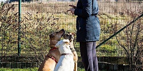 Brisbane Animal Carers,Retailers & Pet Groomers Consultation Workshop