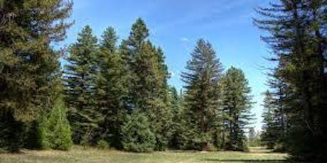 Walk 34  Pialligo Redwoods and beyond   tickets