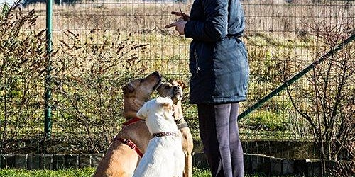Perth Animal Carers, Retailers & Pet Groomers Consultation Workshop