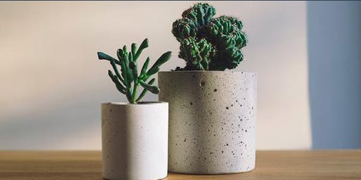 DIY Cute Concrete Planters