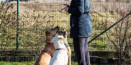 Sydney Animal Trainers and Animal-Assisted Services Consultation Workshop tickets