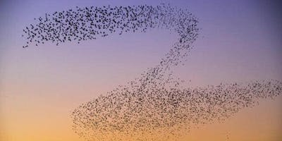 Mid Winter Starlings and Mindfulness Sensory Walk (Gwent Wildlife Trust)