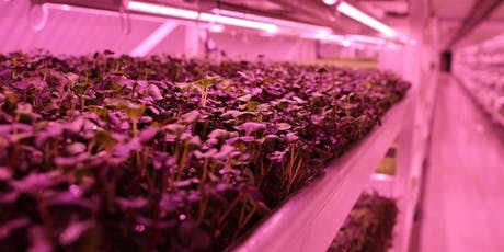 Future of Food Society: Growing Underground Private Tour tickets