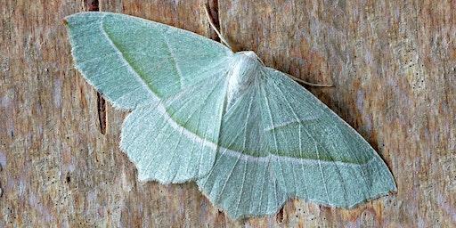 Moth Monitoring Morning