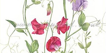 Botanical Illustrations - Spring Flowers