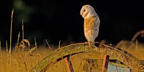 Barmy about barn owls tickets