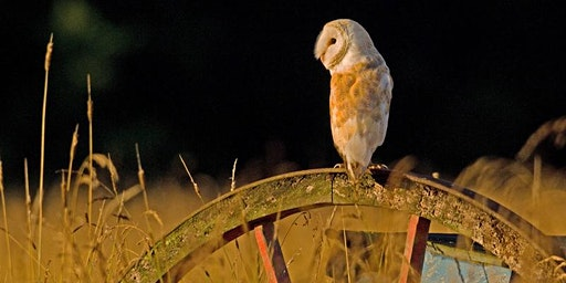 Barmy about barn owls