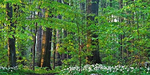 Tree Planting & Care Workshop - 2020