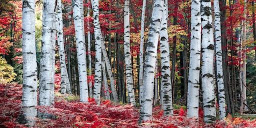 White Mountains Fall Foliage