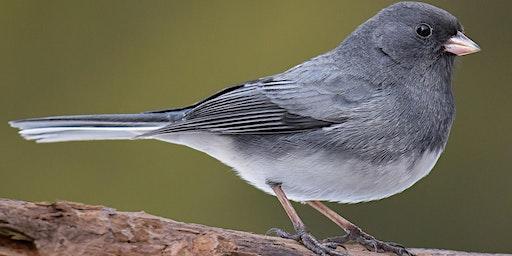 Elmwood Cemetery Bird Walk