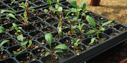 Feb Gardening 101: Yes, it's time to start planting!