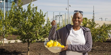 Pruning and Care of the Community or Backyard Coastal Citrus Orchard tickets