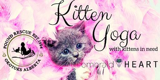 Kitten yoga with Pound Rescue