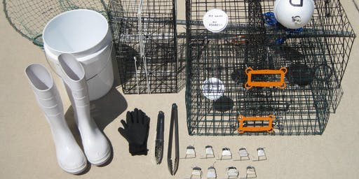 Crabbing Basics: making it Delicious, keeping it Sustainable