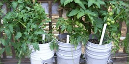 Master Gardener School: Growboxes