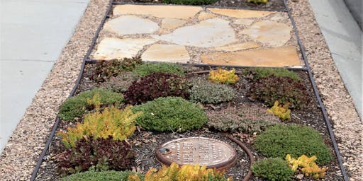 Creating Waterwise Park Strips