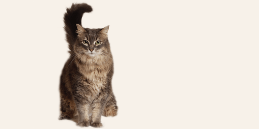 Cat Foster Orientation 3/14/20