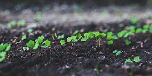 Soil Amendments: What and When?