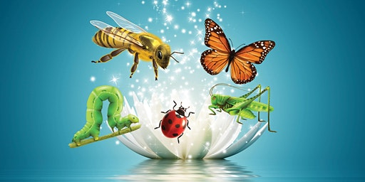 Summer School Holidays - Big Brave Bugs