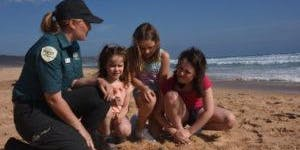 Junior Rangers Beach Treasure Hunt - Ricketts Point Marine Sanctuary