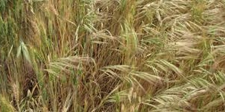 Brome Grass Management  Murtoa, Noradjuha & Dimboola tickets