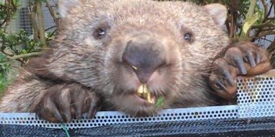Wombat Care - ACT Wildlife
