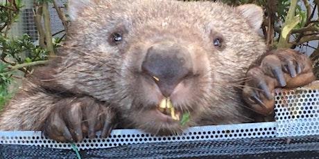 Wombat Care - ACT Wildlife  tickets