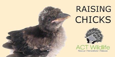 Baby Bird Course - ACT Wildlife tickets