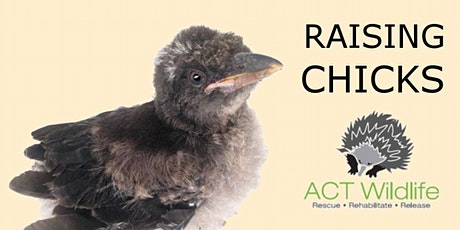 Baby Bird Course - ACT Wildlife tickets