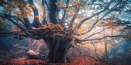 Mayor's SRC Magic Faraway Tree - Woodcroft Library