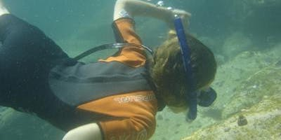 Snorkelling at Bare Island