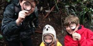 Junior Rangers Flora Explorer- Dandenong Ranges National Park