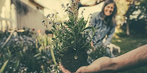 Winter Solstice Community Plant Sale
