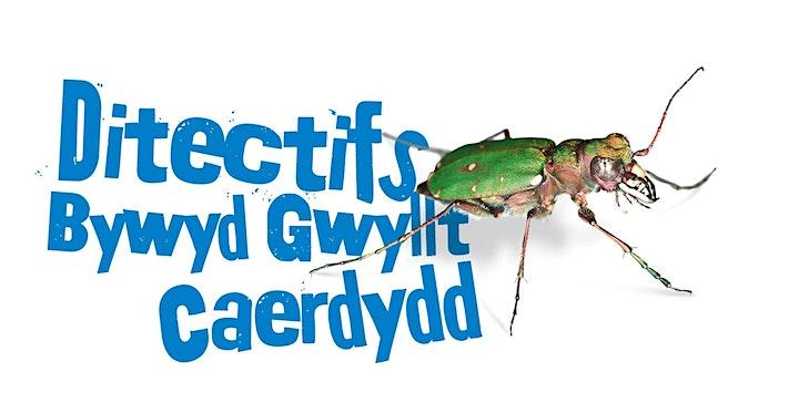 Cardiff Wildlife Detectives - Ditectifs Bywyd Gwyllt Caerdydd image